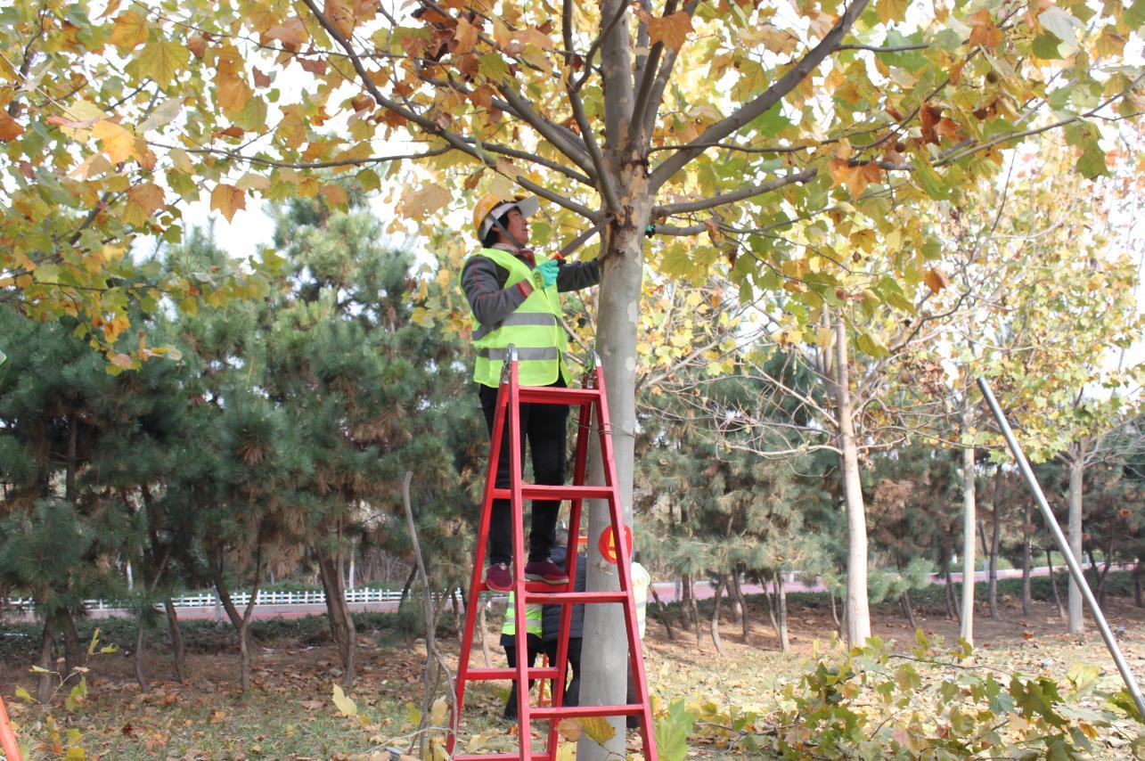 冬季园林技能大赛提升养护管理水平