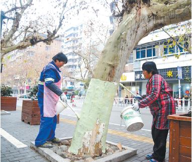 """浙江建德:为城区绿化树木""""穿新衣"""""""
